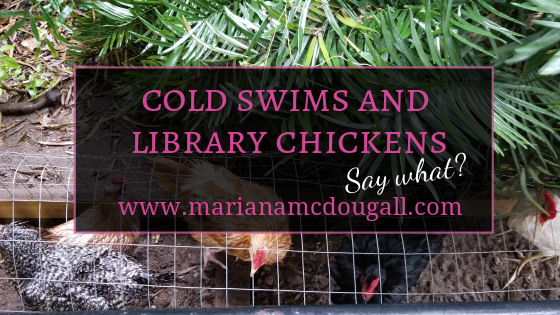 Cold Swims and Library Chickens, Say what? www.marianamcdougall.com. Picture of colourful hens in a chicken run outside of Wakulla County Public Library