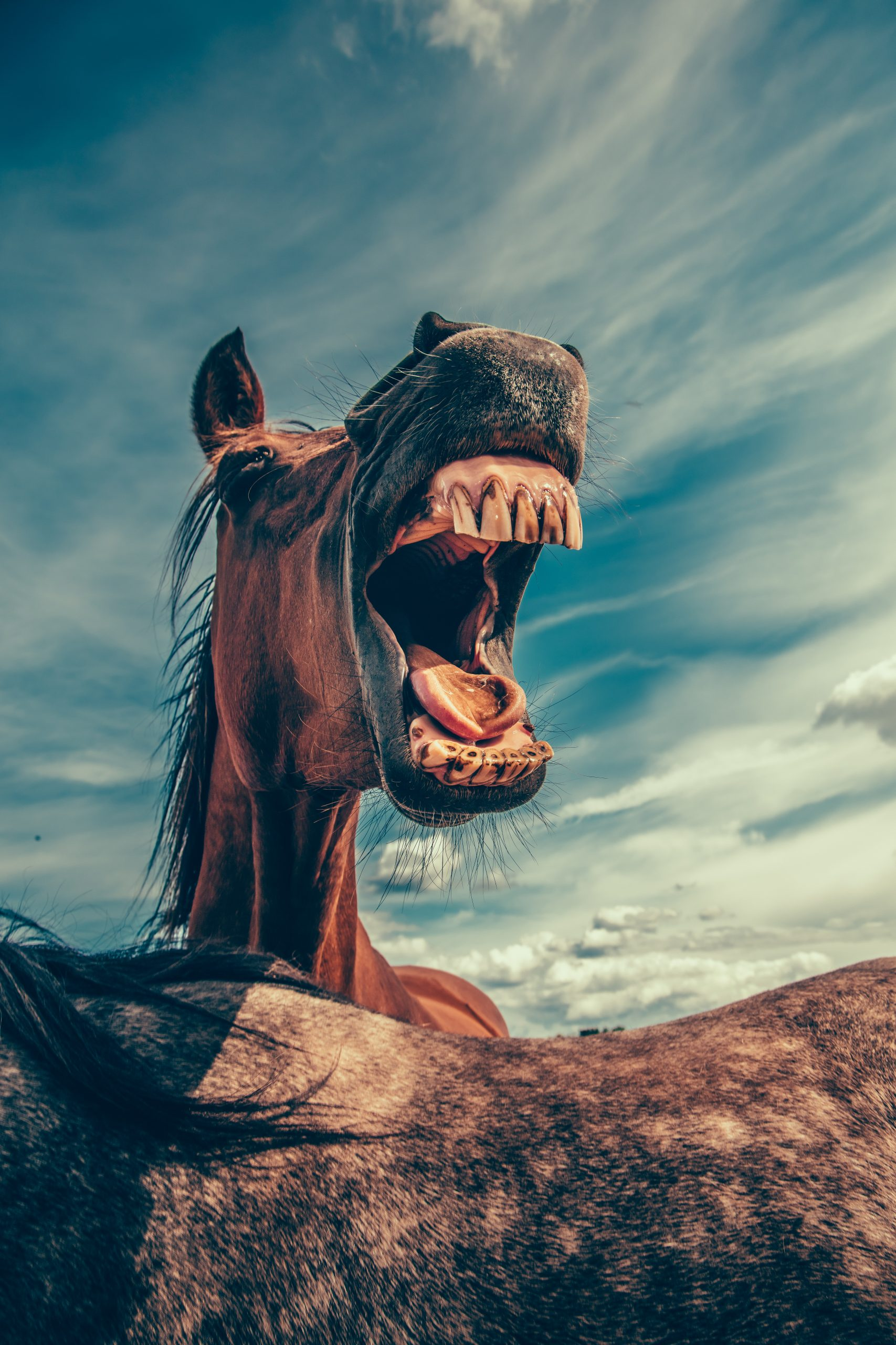 picture of a horse that looks like it's laughing. Hilarious dad jokes on www.marianamcdougall.com Photo by Mikael Kristenson on Unsplash