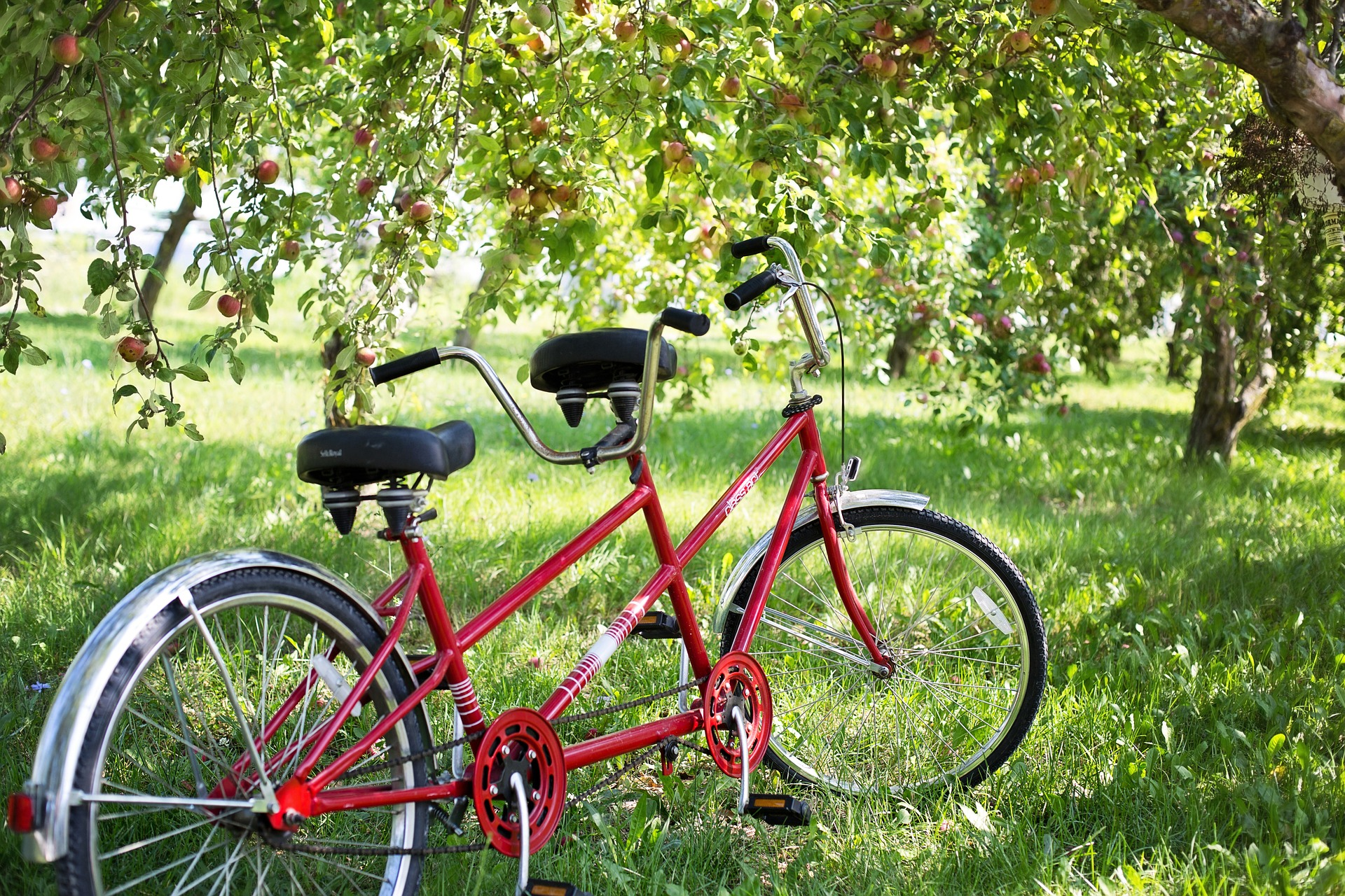 red tandem bicycle in a green field